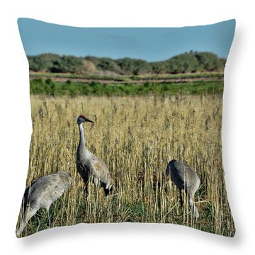 Feeding Greater Sandhill Cranes Throw Pillow by Daniel Hebard
