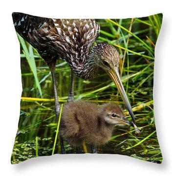 Feeding Limpkin Chick Throw Pillow