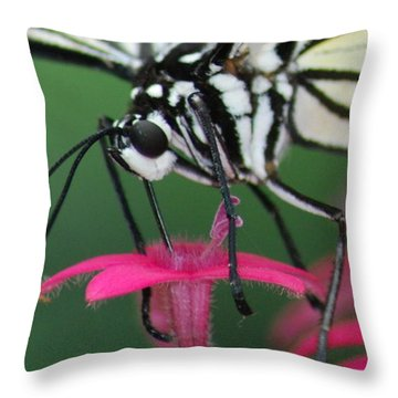 Throw Pillow featuring the photograph Feeding Rice Paper by Richard Bryce and Family