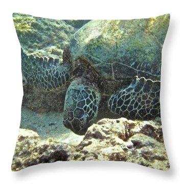 Feeding Sea Turtle Throw Pillow by Michael Peychich
