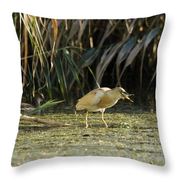 Feeding Squacco Heron Throw Pillow