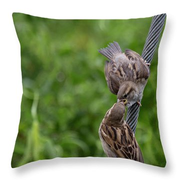 Throw Pillow featuring the photograph Feeding Time by Brian Roscorla
