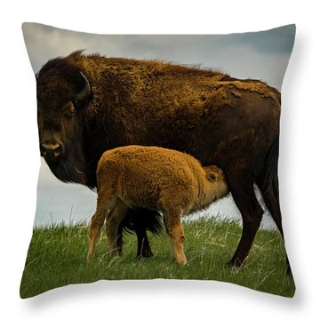 Throw Pillow featuring the photograph Feeding Time II by Gary Lengyel