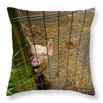 Feeding Time Throw Pillow by Oscar Moreno