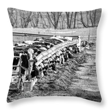 Feedlot Throw Pillow