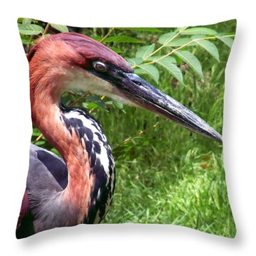 Throw Pillow featuring the photograph Feeling A Bit Peckish by RC deWinter