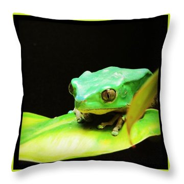 Feeling Froggy Throw Pillow