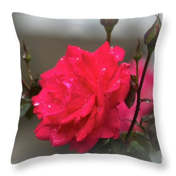 Feeling Rosy Throw Pillow
