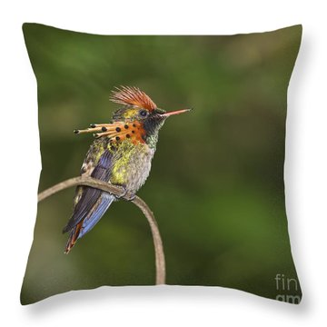 Feisty Little Fellow..  Throw Pillow