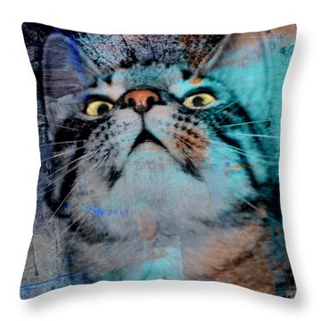 Feline Focus Throw Pillow by Kathy M Krause