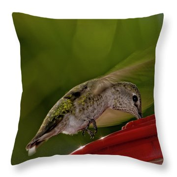 Throw Pillow featuring the photograph Female Anna's Hummingbird H40 by Mark Myhaver
