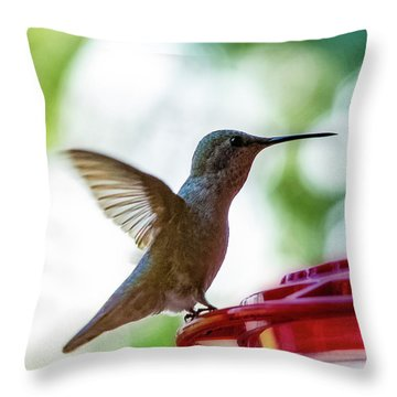 Throw Pillow featuring the photograph Female Anna's Hummingbird V24 by Mark Myhaver