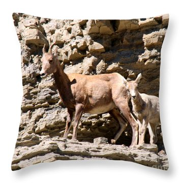 Female Bighorn Sheep With Juvenile Throw Pillow