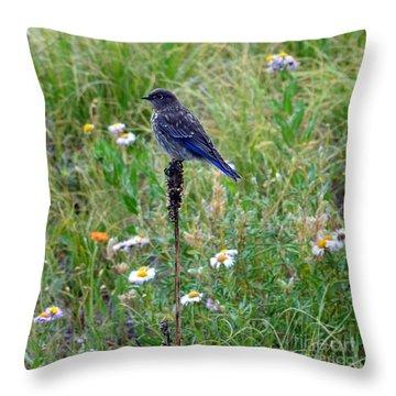 Throw Pillow featuring the photograph Female Bluebird by Dorrene BrownButterfield