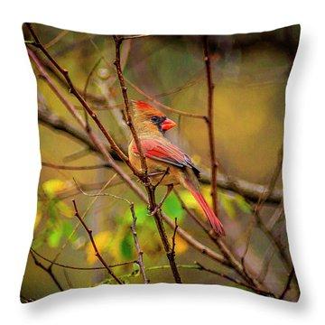 Female Cardinal #1 Throw Pillow