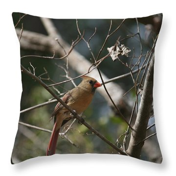 Female Cardinal 3 Throw Pillow