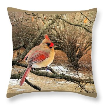 Female Cardinal Caught In The Snow Throw Pillow