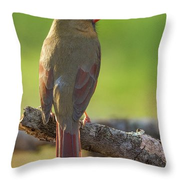 Throw Pillow featuring the photograph Female Cardinal by David Waldrop