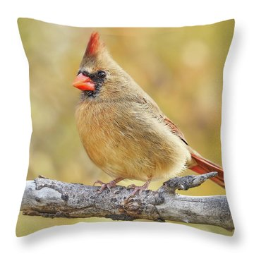 Female Cardinal In Minnesota Autumn Throw Pillow