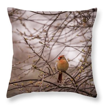 Throw Pillow featuring the photograph Female Cardinal In Spring 2017 by Terry DeLuco