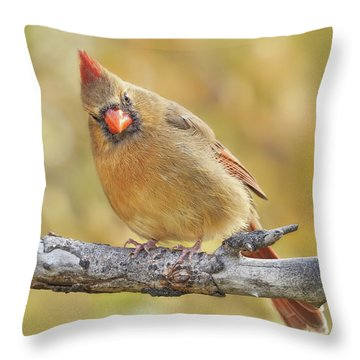 Female Cardinal Is Not Impressed Throw Pillow