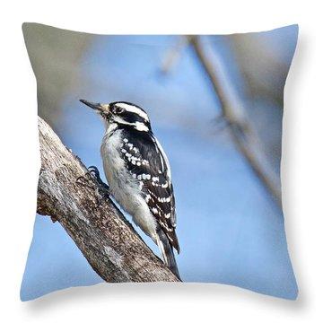 Female Downey Woodpecker 1104  Throw Pillow by Michael Peychich