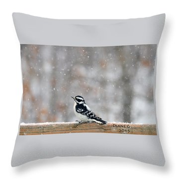 Female Downy Woodpecker Throw Pillow by Diane Giurco