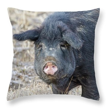 Throw Pillow featuring the photograph Female Hog by James BO Insogna