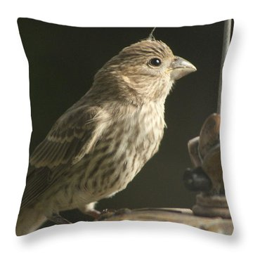 Female House Finch On Feeder Throw Pillow