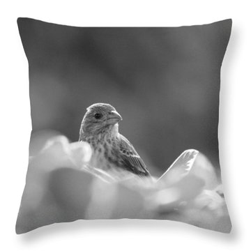 Female House Finch Perched In Black And White Throw Pillow