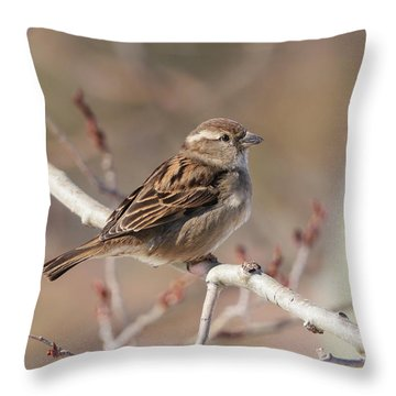 Female House Sparrow Throw Pillow