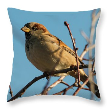 Female House Sparrow Throw Pillow by Mike Dawson