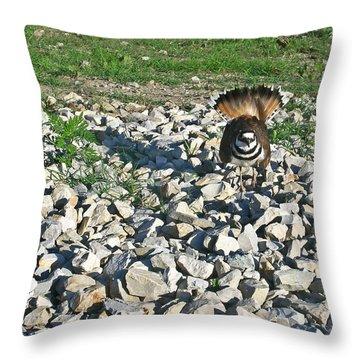 Female Killdeer Protecting Nest Throw Pillow by Douglas Barnett