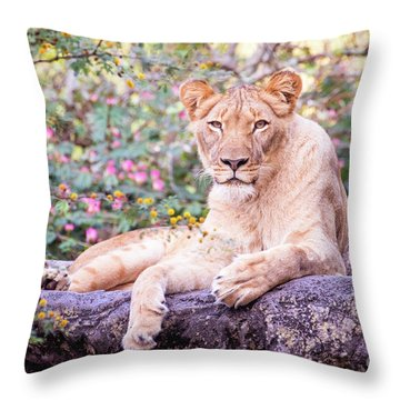Female Lion Resting Throw Pillow by Stephanie Hayes