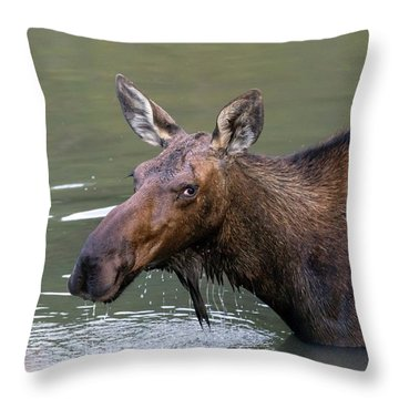 Throw Pillow featuring the photograph Female Moose Head by James BO Insogna