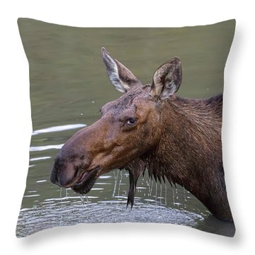 Throw Pillow featuring the photograph Female Moose Head Shot by James BO Insogna