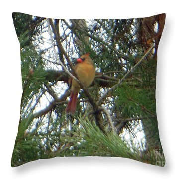 Female Northern Cardinal Throw Pillow