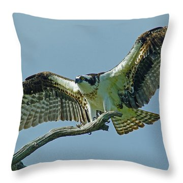 Female Osprey Throw Pillow by Larry Nieland