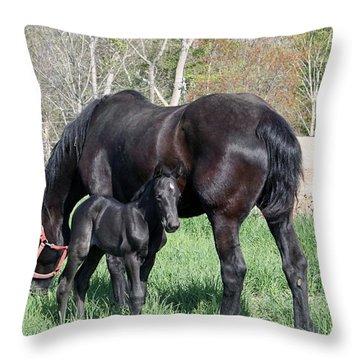 Female Percheron 2 Days Old Throw Pillow