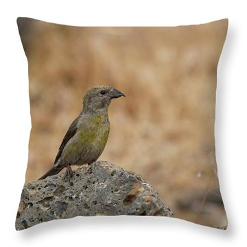 Female Red Crossbill Throw Pillow