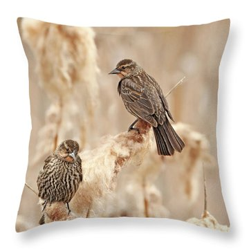 Throw Pillow featuring the photograph Female Red-wing Blackbirds by Jennie Marie Schell