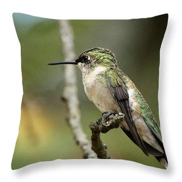 Female Ruby-throated Hummingbird On Branch Throw Pillow