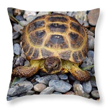 Female Russian Tortoise Throw Pillow