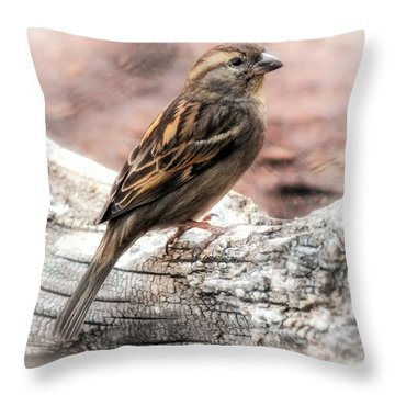 Throw Pillow featuring the photograph Female Sparrow by Elaine Malott