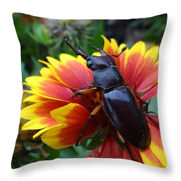 Female Stag Beetle Throw Pillow