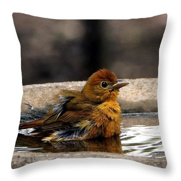Female Summer Tanager In Bird Bath Throw Pillow