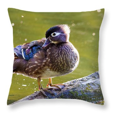 Female Wood Duck Throw Pillow by David Gn