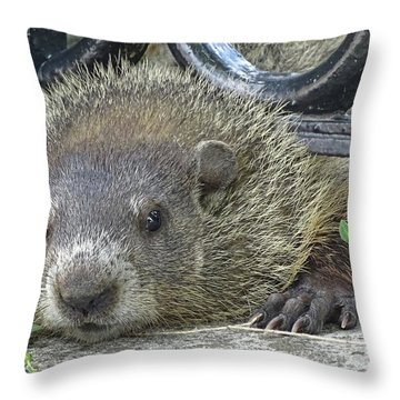 Fence Guard Throw Pillow