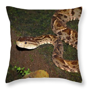 Throw Pillow featuring the photograph Fer-de-lance, Botherops Asper by Breck Bartholomew
