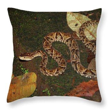 Fer-de-lance, Bothrops Asper Throw Pillow